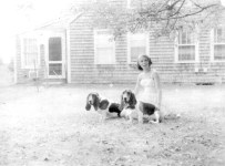 with Basset Hounds in the 1960s